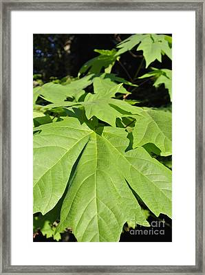 Forest Greens Framed Print