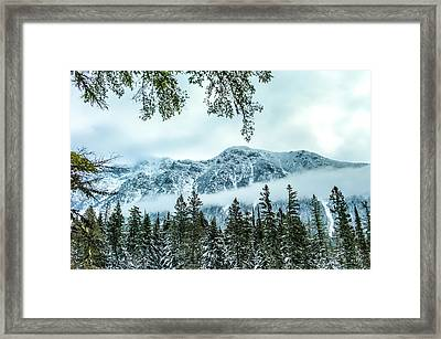 Forest Guardian Framed Print by Aaron Aldrich