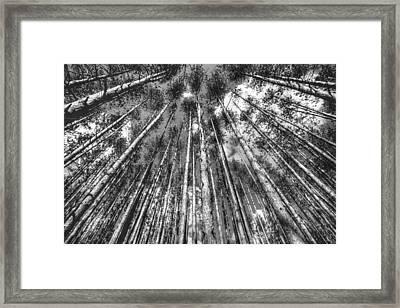 Forest Guards Framed Print