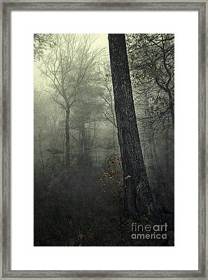 Forest Framed Print by HD Connelly