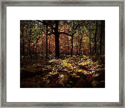 Forest Illuminated Framed Print by Linda Unger