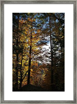 Forest In Autumn Light Framed Print