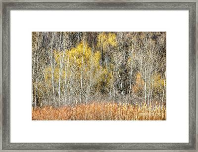 Forest In Late Fall At Scarborough Bluffs Framed Print by Elena Elisseeva