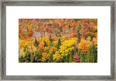 Forest In Peak Autumn Colors Framed Print