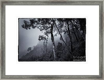 Forest In The Fog Framed Print by Setsiri Silapasuwanchai