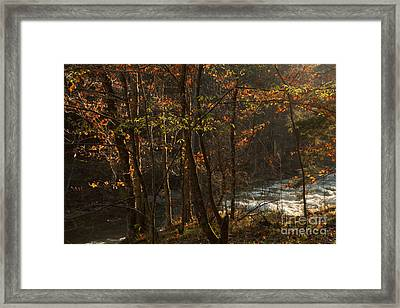 Forest In The Mist Framed Print by Iris Greenwell