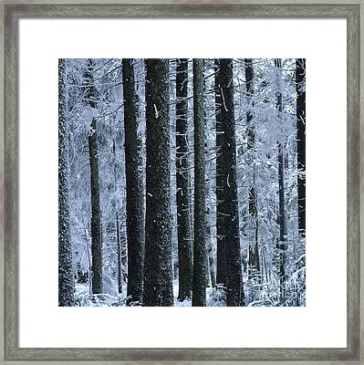Forest In Winter Framed Print