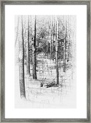 Forest In Winter Framed Print by Tom Mc Nemar