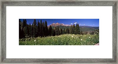 Forest, Kebler Pass, Crested Butte Framed Print by Panoramic Images
