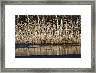 Forest Lake In Early Spring Framed Print