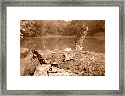 Forest Lakes Framed Print by Miguel Winterpacht