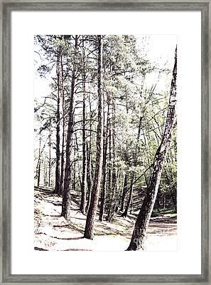 Forest  Framed Print
