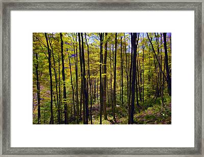 Forest Framed Print by Lanjee Chee
