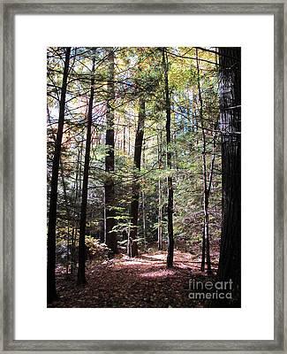 Forest Light Framed Print by Linda Marcille
