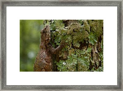 Forest Lizard 2 Framed Print
