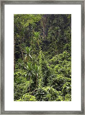 Forest Lobelia (lobelia Gibberoa Framed Print