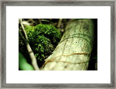 Forest Love Framed Print