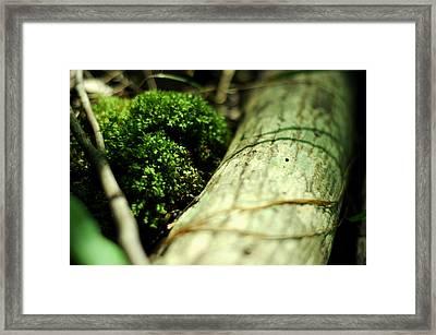 Forest Love Framed Print by Rebecca Sherman