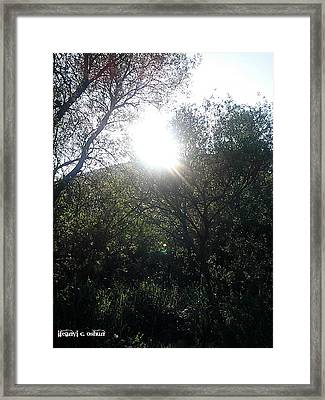 Forest Magick 1 Framed Print by Ifeanyi C Oshun