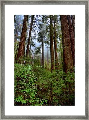 Forest Mist Framed Print