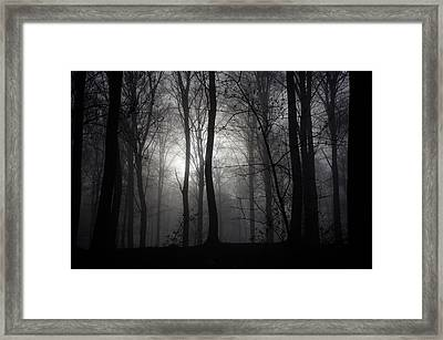 Forest Mist Framed Print by Mark David