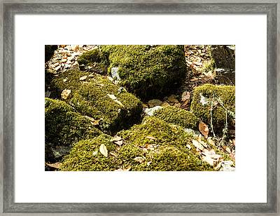 Forest Moss Framed Print by Suzanne Luft