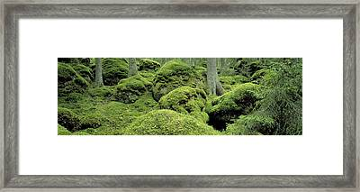 Forest Moss Sweden Framed Print