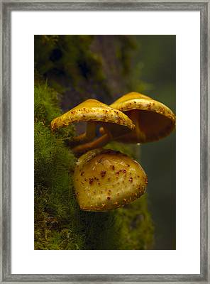 Forest Mushrooms Framed Print by Sharon Talson