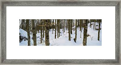 Forest Near Lake Bled, Upper Carniola Framed Print