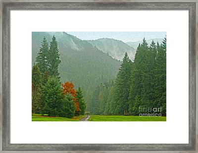Forest Framed Print by Nur Roy