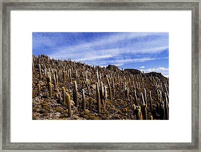 Framed Print featuring the photograph Forest Of Cacti by Lana Enderle