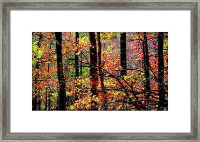 Color The Forest Framed Print by Karen Wiles