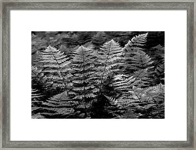 Framed Print featuring the  Forest Of Ferns by Haren Images- Kriss Haren