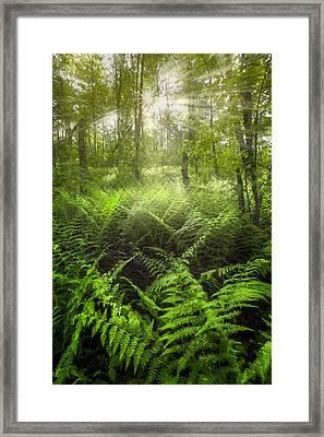 Forest Of Light Framed Print by Debra and Dave Vanderlaan