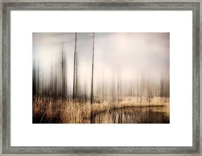 Forest Of Maine Framed Print