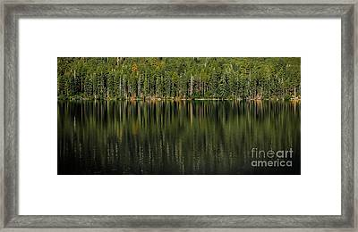 Forest Of Reflection Framed Print by Mitch Shindelbower