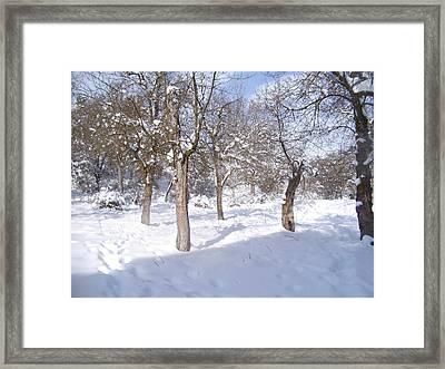 Forest Ofconstantine Framed Print by Boultifat Abdelhak badou