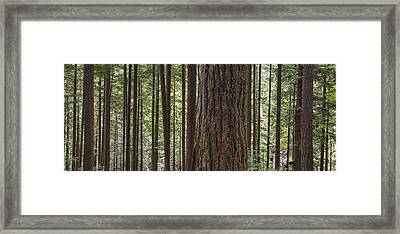 Forest On The Hillside Of Grouse Framed Print by Robert Postma
