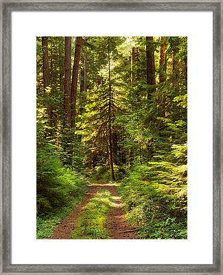 Forest Path 5 Framed Print by Leland D Howard