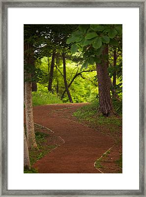 Framed Print featuring the photograph Forest Path by Brad Brizek