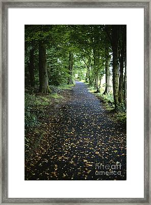 Forest Path Framed Print by Chris Selby
