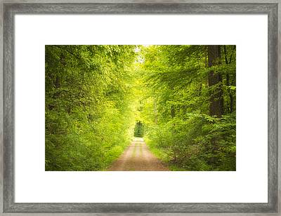 Forest Path Leading Into The Light Framed Print