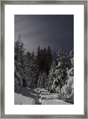 Forest Path Framed Print by Maurizio Bacciarini