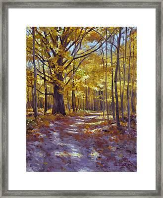 Forest Path Framed Print by Scott Harding