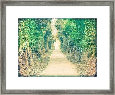 Forest Path Framed Print by Tom Gowanlock