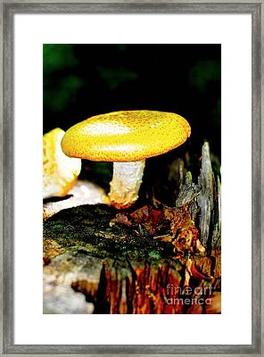 Forest Pearl II Framed Print by Catherine Reusch Daley