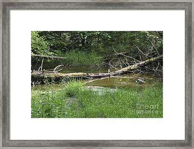 Forest Pond Framed Print