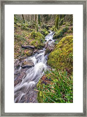 Forest Rapids Framed Print by Adrian Evans