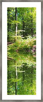 Framed Print featuring the photograph Forest Reflections by John Stuart Webbstock