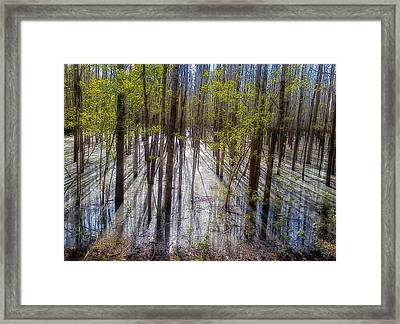 Forest Reflections Framed Print